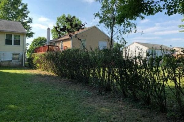 A after photo of a overgrown fence line after Susquehanna Lawn Care's pruning service. All the shrubs have been neatly pruned to a even level.