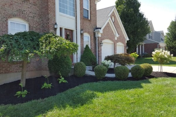A large landscape bed running along the edge of a large home. The landscape bed has been serviced by Susquehanna Lawn Care and they have top dressed the mulch and pruned all the shrubs and small trees.