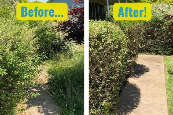 A before and after comparison of Susquehanna Lawn Care's fall pruning service. In the before photo, several overgrown shrubs are covering a walkway. In the after photo, the shrubs have been pruned back and are neatly surrounding the walkway.