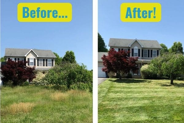 A before and after comparison of the difference a spring cleanup from Susquehanna Lawn Care makes. In the first photo, the grass is overgrown and the trees are long and shapeless. Afterwards, the grass has been mowed and the trees have been pruned.