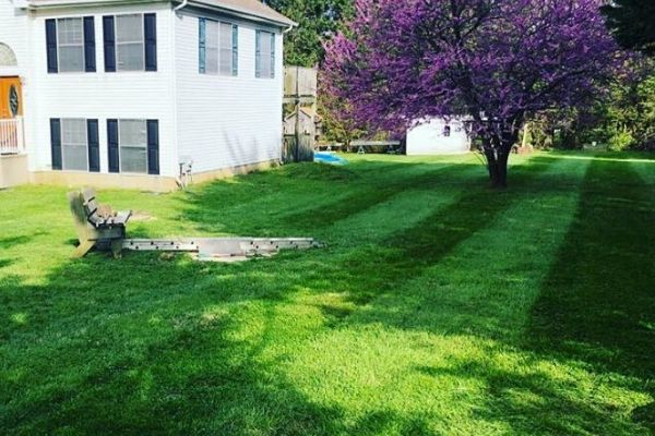 A very freshly mowed lawn with very green grass.