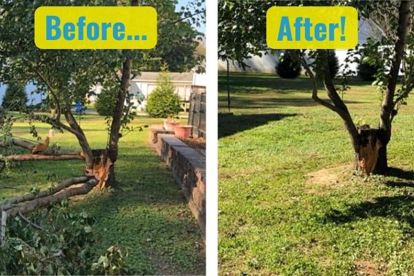 A before and after comparison of the Susquehanna Lawn Care's tree pruning service. In the before photo, a small tree is in the process of being pruned and is surrounded by fallen branches. In the after, the tree has been expertly trimmed and all fallen branches have been cleared away.
